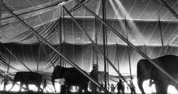 tent-raising