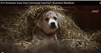 Budweiser Lost Dog